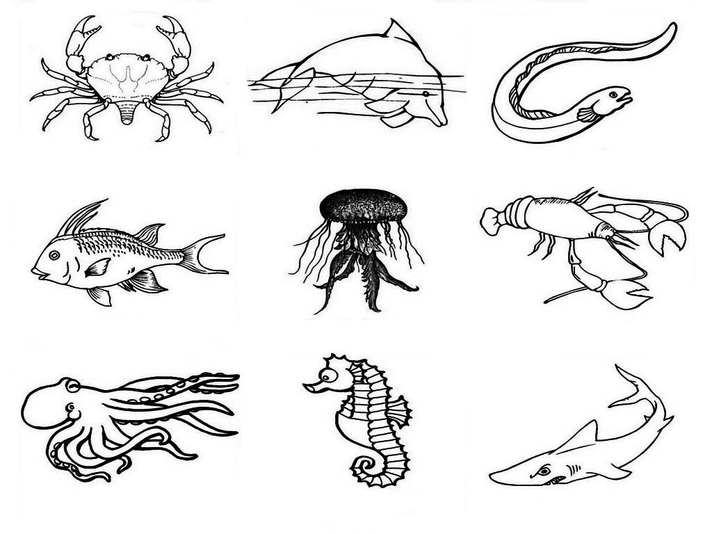 Dibujos De Peces Para Imprimir Y Colorear: Peces Para Colorear