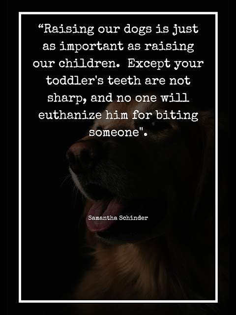 dog behavior quote