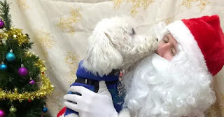 Adorable Doggie Photo Shoots With Santa Are The Pawesome Trend This Christmas
