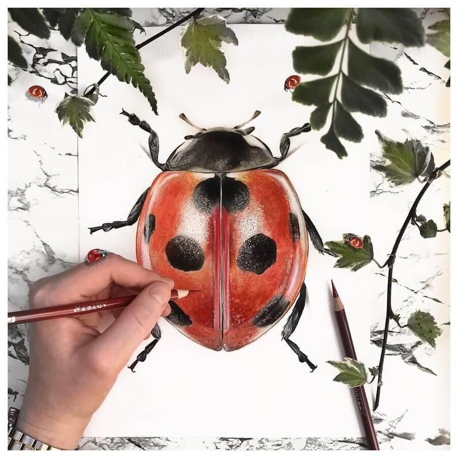 04-Armoured-Ladybird-Solene-Pasquier-www-designstack-co