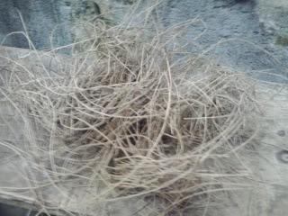 Burung Murai Batu- Model Kandang Penangkaran Untuk Burung Murai Batu - Model Kadang Penangkaran Burung Murai Batu -  Yang Memang Mirip Ukuran dll dengan Burung Jalak Suren