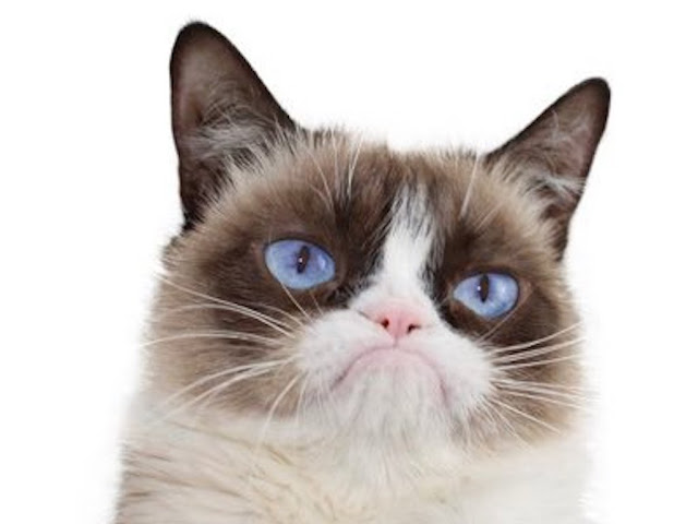 Grumpy Cat-Whose-Scowl-Launched-Million-Memes-Has-Passed-The-Age-Of-7