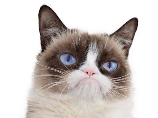 Grumpy Cat, Whose Scowl Launched A Million Memes, Has Passed At The Age Of 7