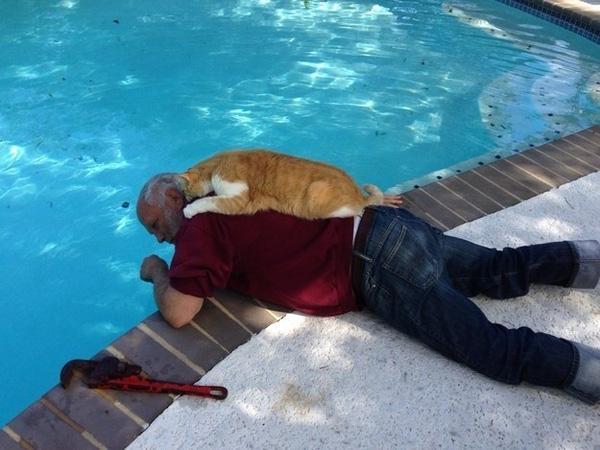 20 khoảnh khắc làm trò đáng yêu nhất trần đời của team mèo đỏng đảnh
