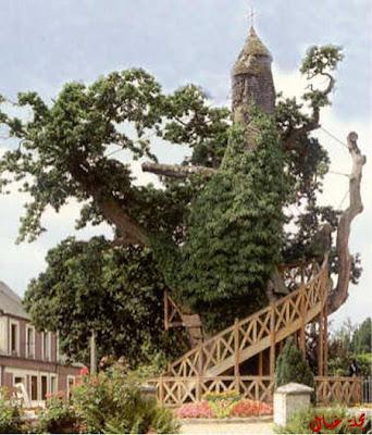 مجموعة من أغرب الاشجار حول العالم tree_7.jpg