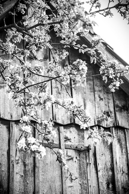 Monochrome Photografie, Schwarz Weiß Fotografie