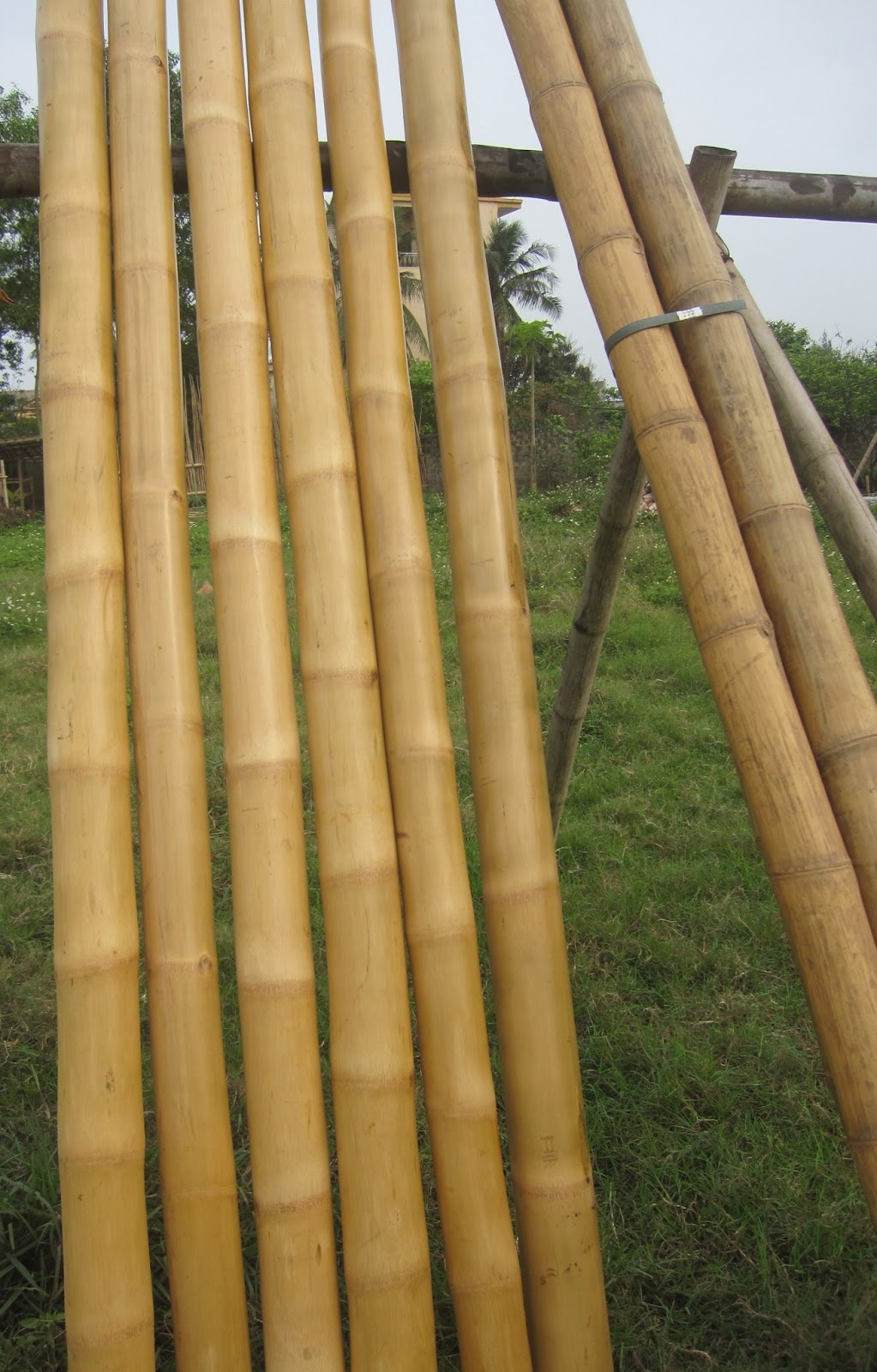 2 8 Bamboo Poles Natural Sanded Carbonized 10 Cane Stick Stake 3in 4 5 6 12 In Bundles