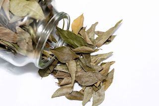 Natural Remedies to Cure Cancer with Bay Leaves
