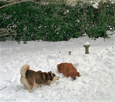 Dogs playing in the snow together