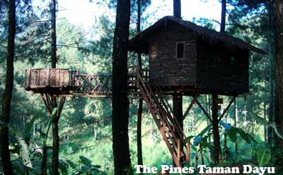 tempat camping the pines taman dayu