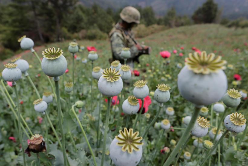 Cárteles Mexicanos, la principal fuente de heroína para el mercado en EEUU