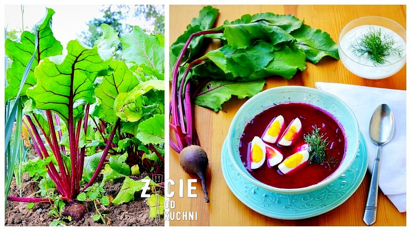 buraki, barszcz, botwinka, zupa, sezonowa kuchnia, ogrod, warzywa w ogrodzie, blog, zycie od kuchnia