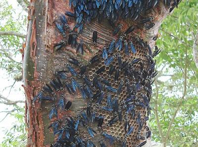 panal de avispas azules