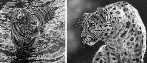 00-Julie-Rhodes-Wildlife-Animals-Realistic-Pencil-Drawings-www-designstack-co