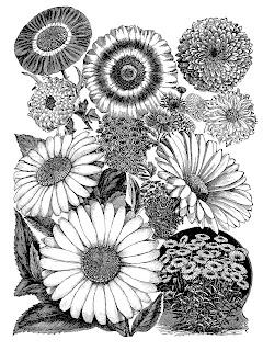 flower daisy illustration digital transfer image vintage