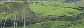 Tempat Wisata Agro Terbaik di Indonesia Tempat Wisata Terbaik Yang Ada Di Indonesia: 5 Tempat Wisata Agro Terbaik di Indonesia