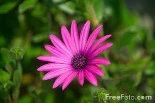 Image: Flowers (c) FreeFoto.com