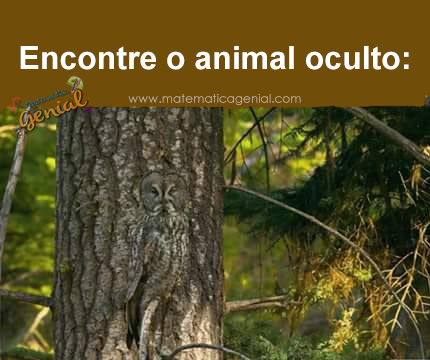 Encontre o animal oculto