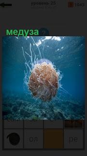 1100 слов плавает медуза под водой 25 уровень