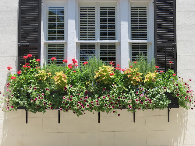 easy to maintain coleus geraniums flower box hgtv better homes and gardens