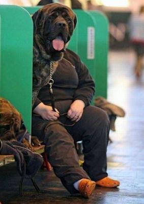 Funny Dog Dumb Mutt Photo Bomb