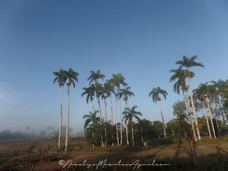 paisaje Cuba Isla Mía @norelysmorales