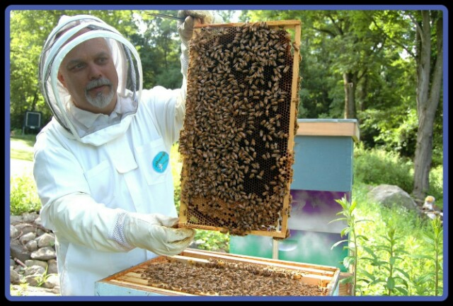 apiculture,bees,man,necter