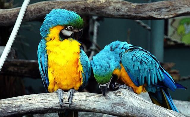 Vừa nghe thông tin về bạn, con vẹt lăn đùng ra chết và sự thật khiến mọi người suy ngẫm