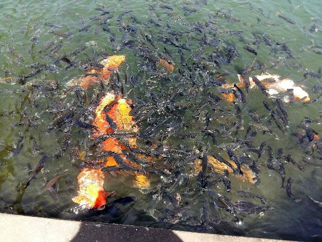 Что посмотреть на Бали.Тирта Ганга — водный дворец (Tirta Gangga )