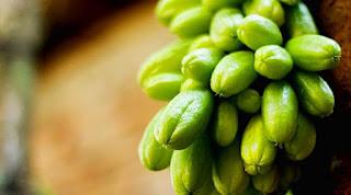 buah blimbing wuluh