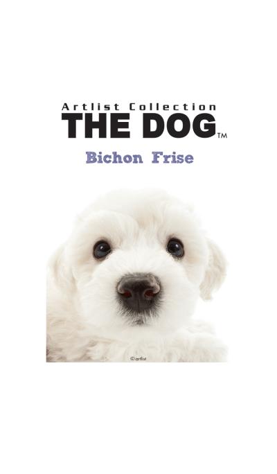 THE DOG Bichon Frise
