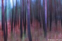 Droites forestières, Fontainebleau, 2019