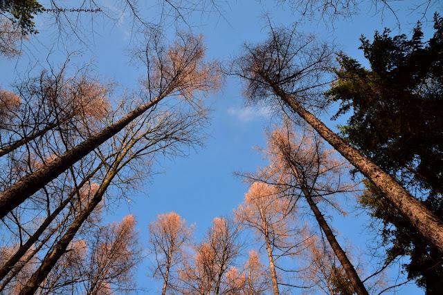 Zimowa wariacja z drzewem w tle