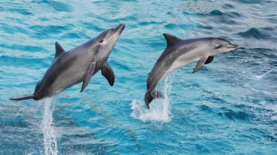 """الدلافين تنادي بعضها بـ """"أسماء"""" كالبشر.!!"""