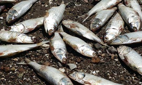 Costa Rica: denuncian contaminación de ríos