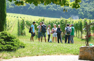 studenti in vigna