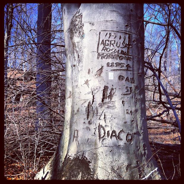 Patch Of Shade Tree Graffiti