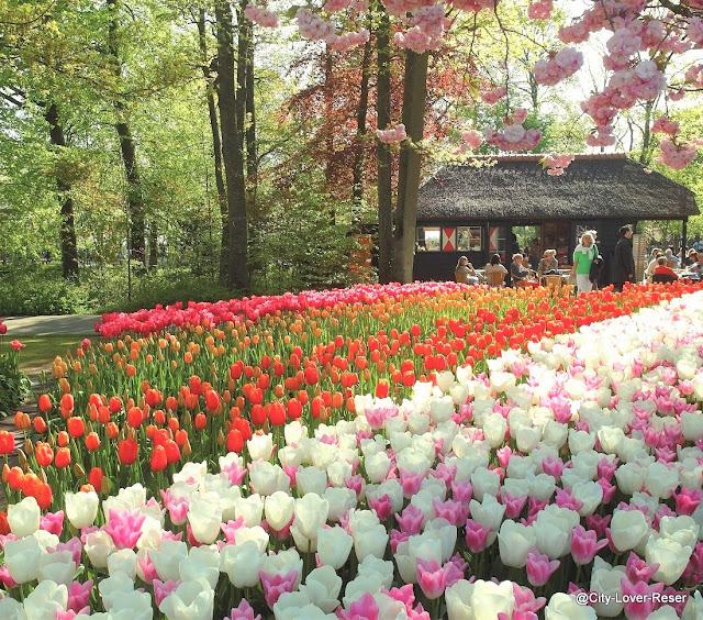 Amsterdam, Keukenhof gardens