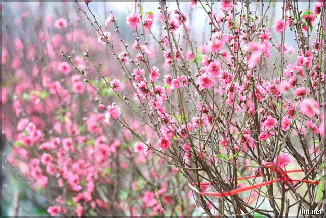 sắc hoa ngày Tết