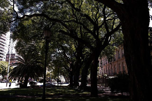 Sombra de árboles en fila en la Avda. del Libertador.