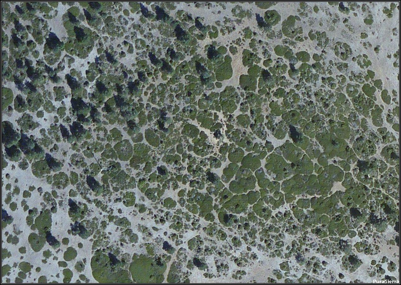 Piel de leopardo en Villar Del Cobo