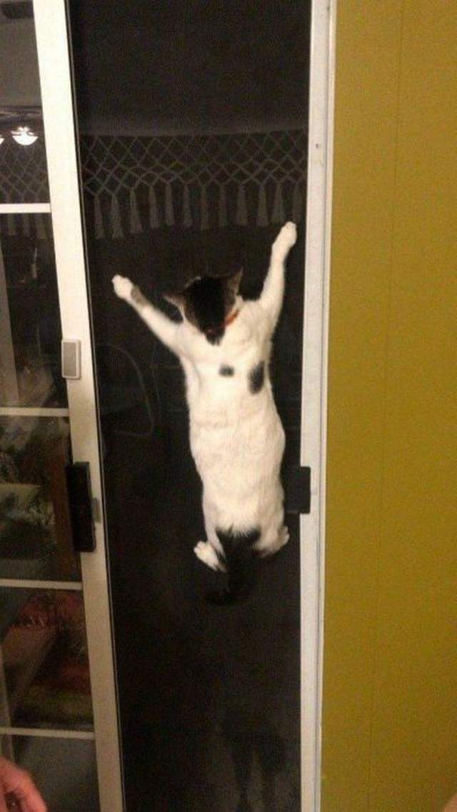 Funny cats - part 321, adorable cat picture, funny cat