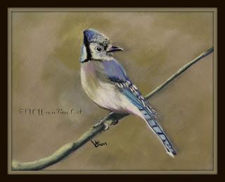 blue jay pastel painting ncwren
