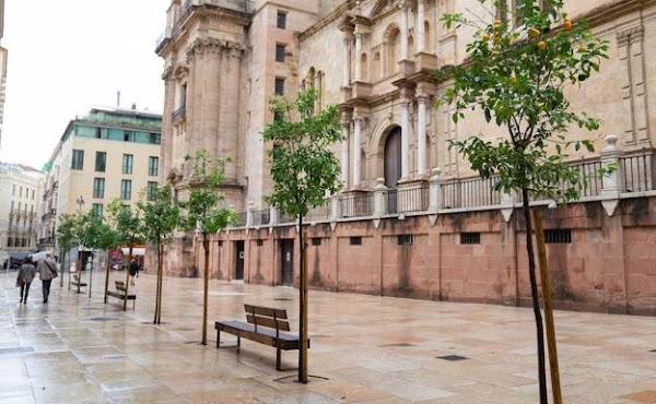 Los naranjos de Postigo de los Abades de Málaga serán de quita y pon para el nuevo recorrido de las cofradías