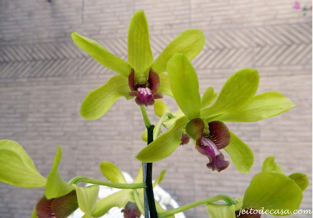 orquidea esverdeada