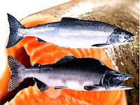 ikan salmon untuk penderita diabetes