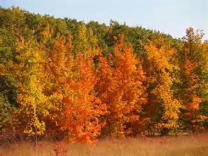 Bioma Hutan Gugur: Ciri, Flora Fauna dan Sebarannya