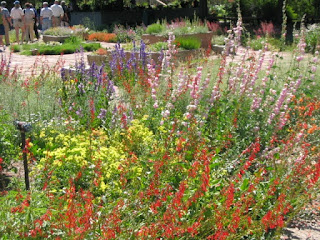 Design a Native Plant Garden