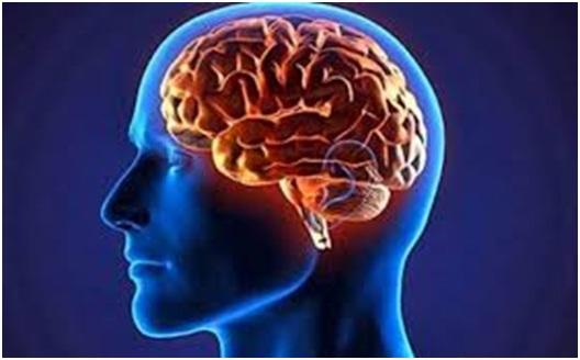 الاوميجا3 والدماغ