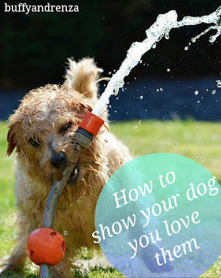How to show your dog you love them